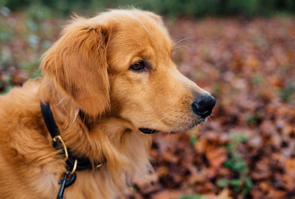 hundefutter auf rechnung bestellen bersicht der top shops